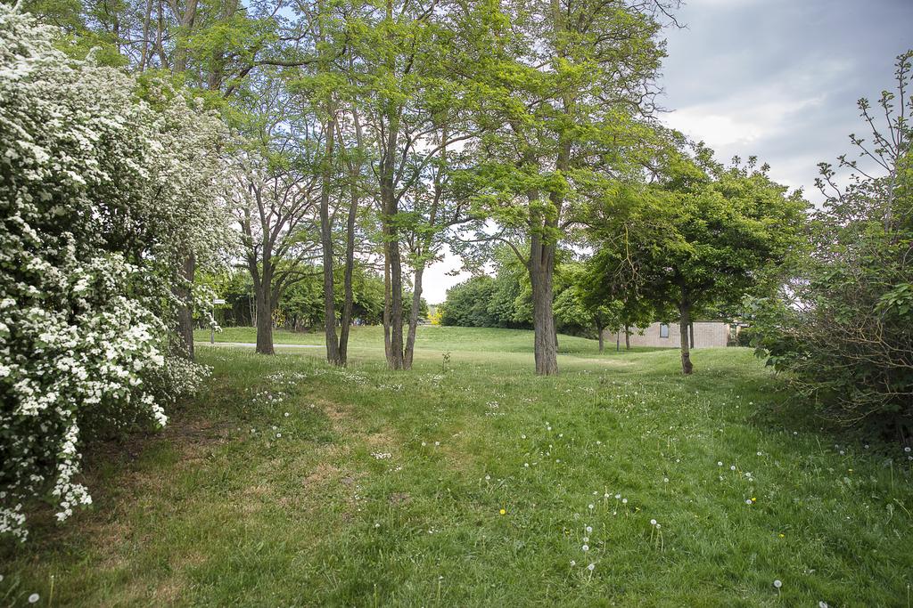 Närmiljö med stora grönområden