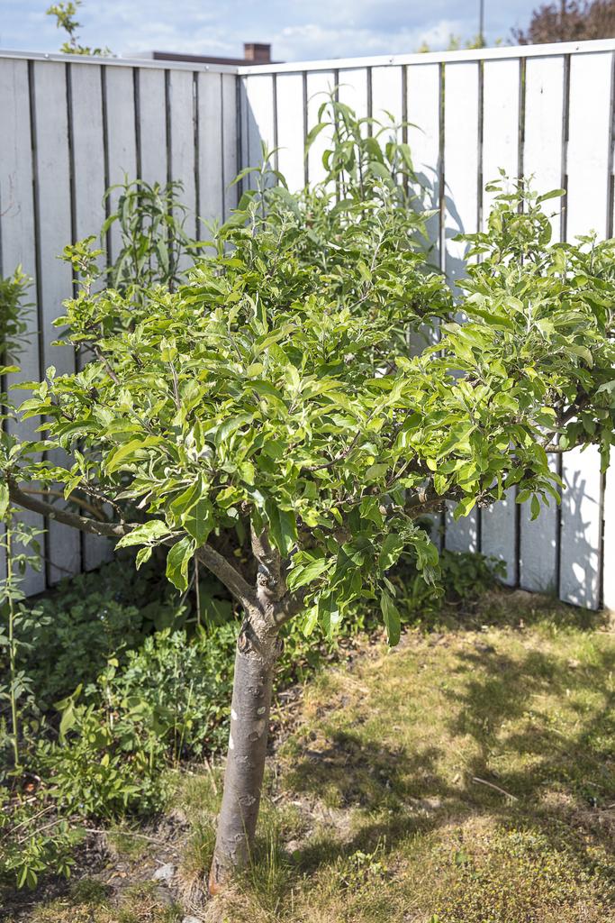 Trädgården erbjuder flera olika buskar och träd