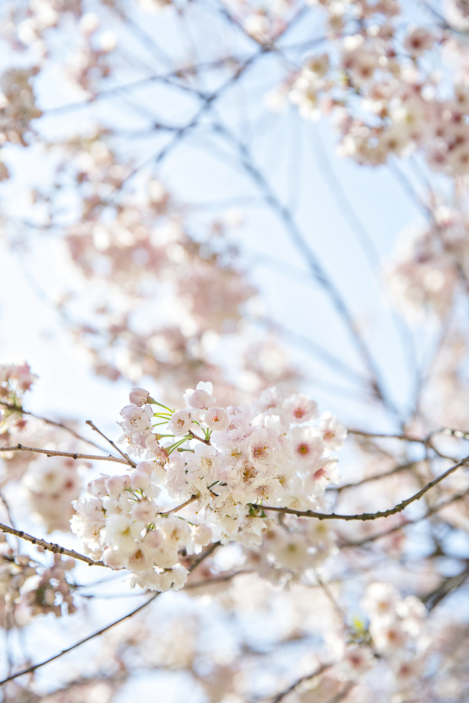 Detaljbild - blommande träd på gården